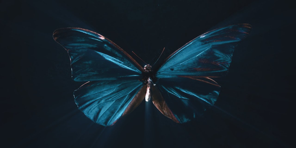 A butterfly for the chaos theory